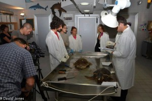 Filming turtle necropsy