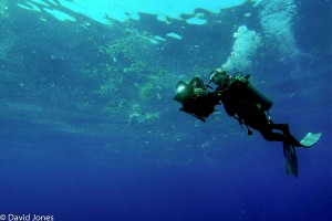 Sri Lanka - diver filming pollution