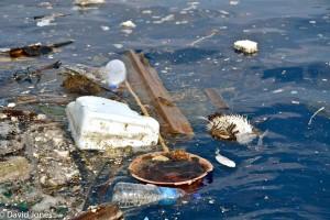 Sri Lanka - plastic pollution marine life