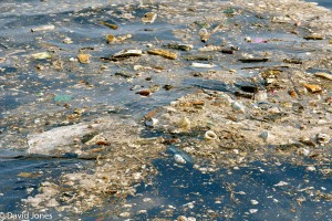 Sri Lanka - pollution in whale area