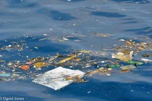 Sri Lanka - pollution in whale feeding area