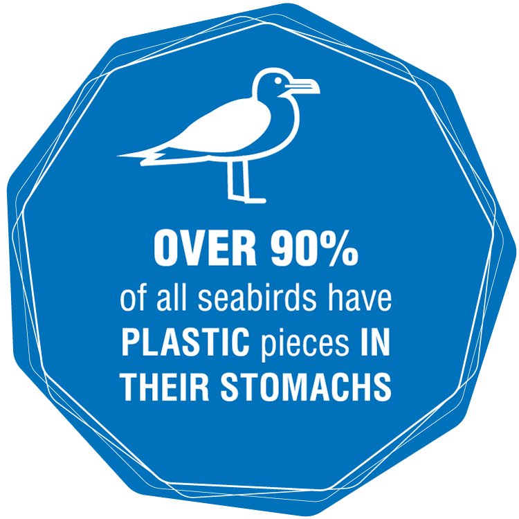 Over 90% of all seabirds have plastic pieces in their stomachs
