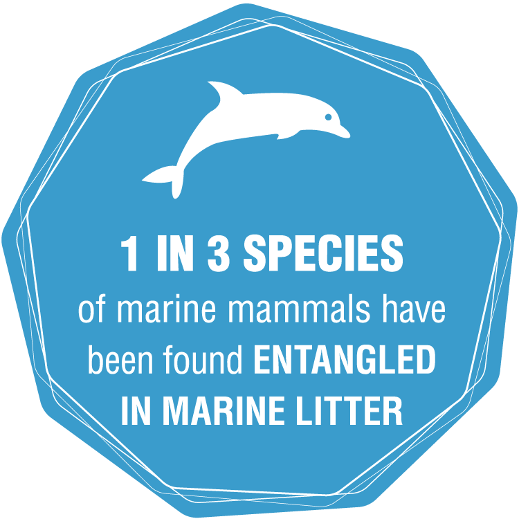 1 in 3 Species of marine mammals have been found entangled in marine litter