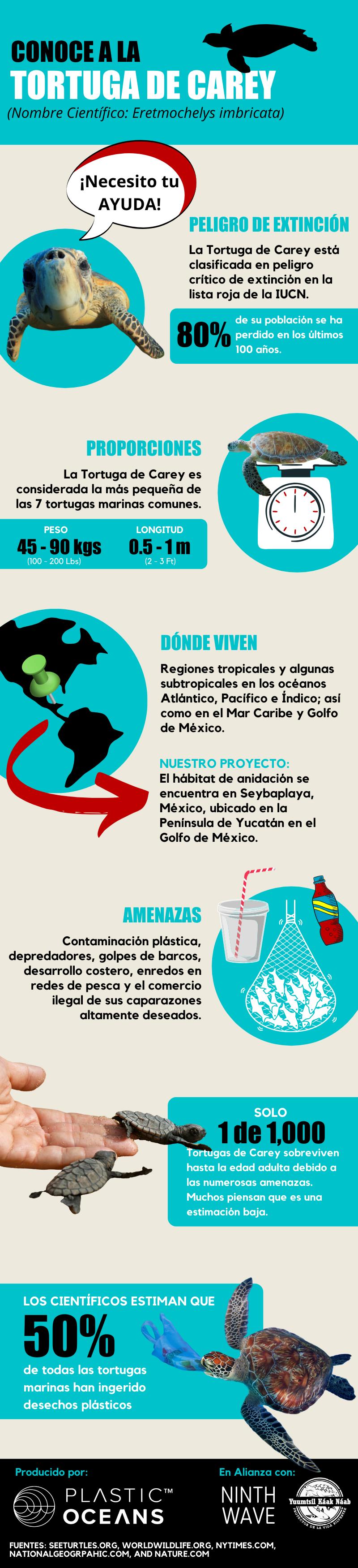Infografía de la tortuga carey